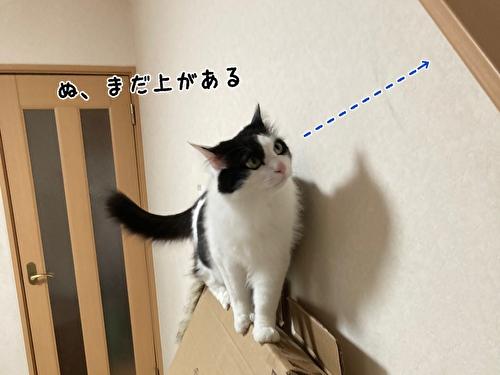 f:id:fukufukudo:20210406153102j:plain