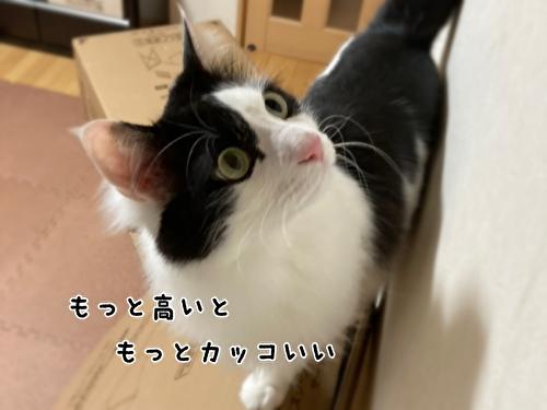 f:id:fukufukudo:20210406153117j:plain