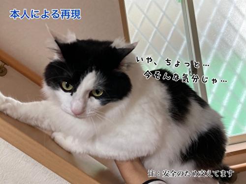 f:id:fukufukudo:20210406153451j:plain