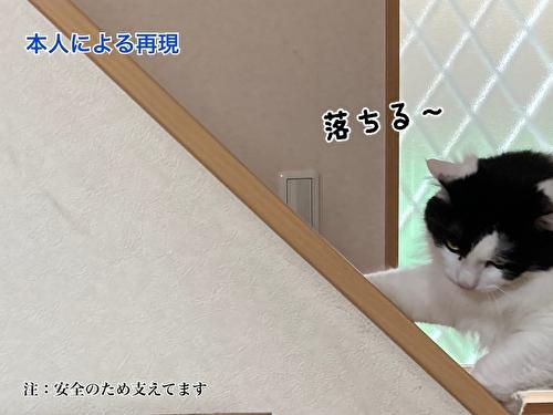 f:id:fukufukudo:20210406153532j:plain