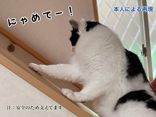 f:id:fukufukudo:20210406154121j:plain