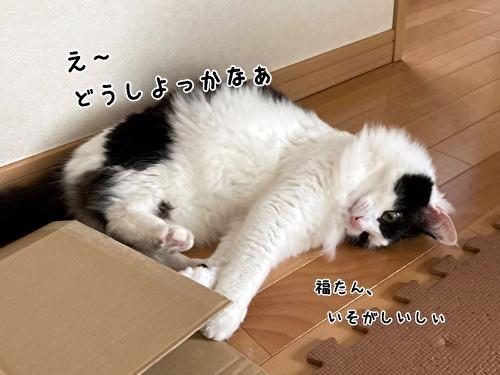 f:id:fukufukudo:20210408170603j:plain