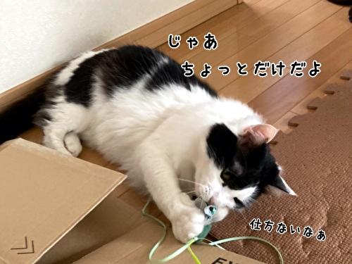 f:id:fukufukudo:20210408170622j:plain