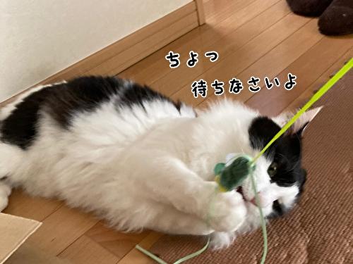 f:id:fukufukudo:20210408170650j:plain