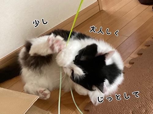 f:id:fukufukudo:20210408170803j:plain