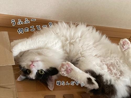 f:id:fukufukudo:20210408170903j:plain