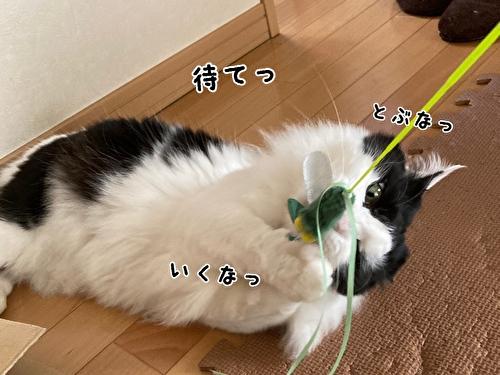 f:id:fukufukudo:20210408171002j:plain
