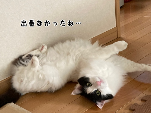 f:id:fukufukudo:20210410135041j:plain
