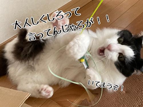 f:id:fukufukudo:20210411140459j:plain
