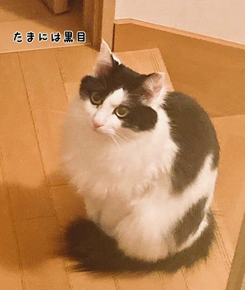 f:id:fukufukudo:20210414115853j:plain