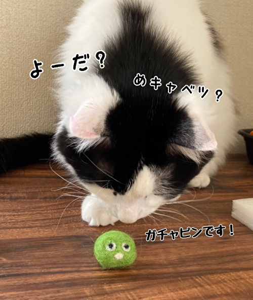 f:id:fukufukudo:20210414121504j:plain