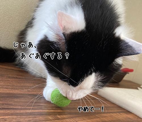f:id:fukufukudo:20210414121552j:plain