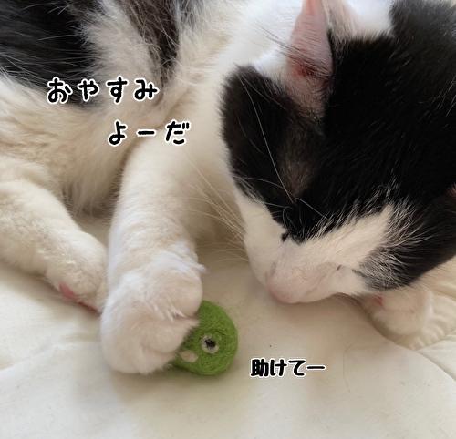 f:id:fukufukudo:20210414121628j:plain