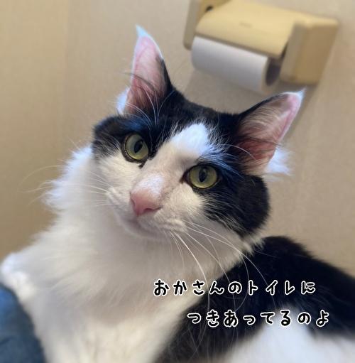 f:id:fukufukudo:20210415171709j:plain