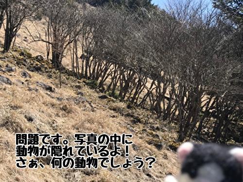 f:id:fukufukudo:20210420161934j:plain