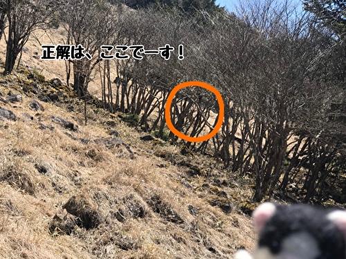 f:id:fukufukudo:20210420161949j:plain