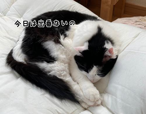 f:id:fukufukudo:20210422132515j:plain