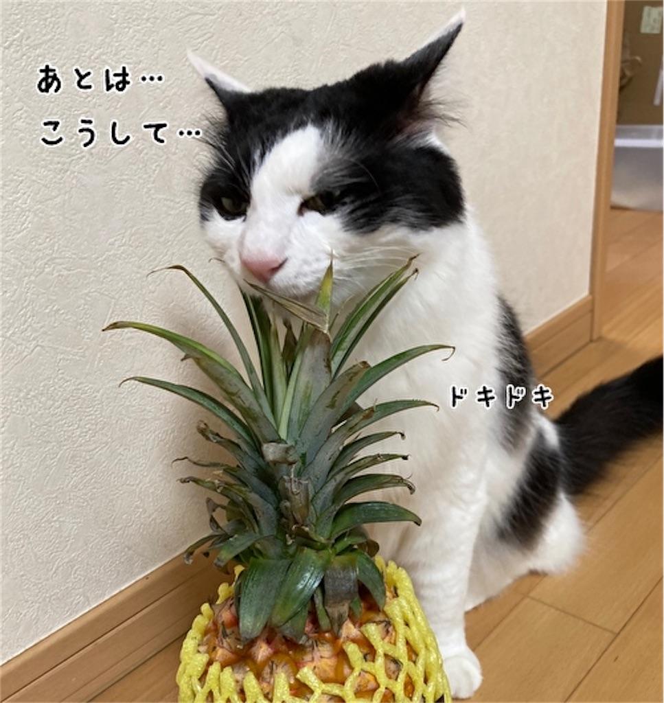 f:id:fukufukudo:20210504152731j:plain