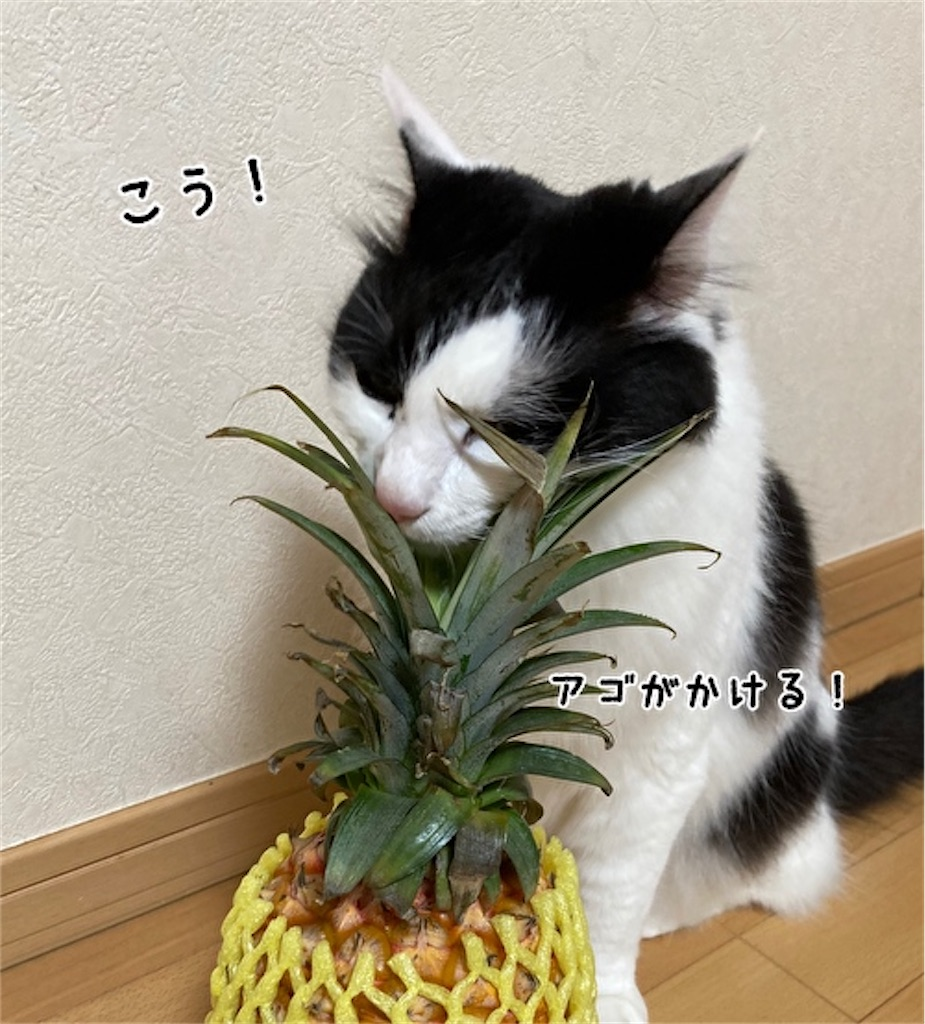 f:id:fukufukudo:20210504152739j:plain