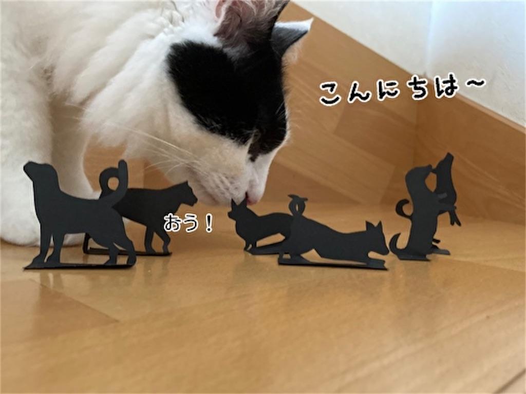 f:id:fukufukudo:20210915123501j:plain