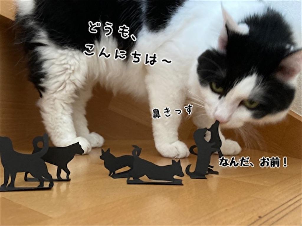 f:id:fukufukudo:20210915123513j:plain