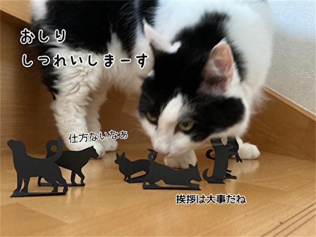 f:id:fukufukudo:20210915123523j:plain