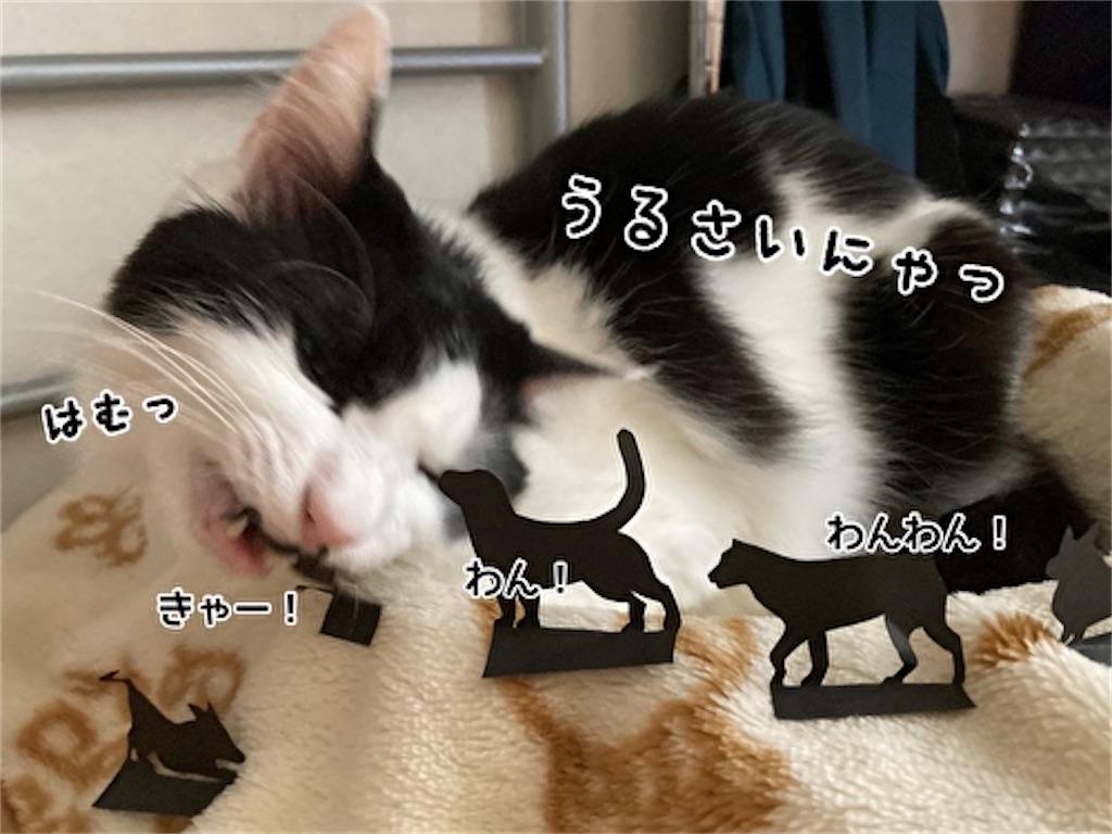 f:id:fukufukudo:20210915123603j:plain