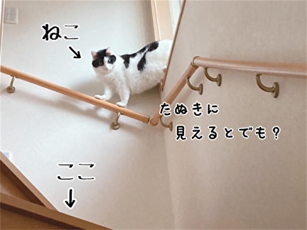 f:id:fukufukudo:20211003082128j:plain