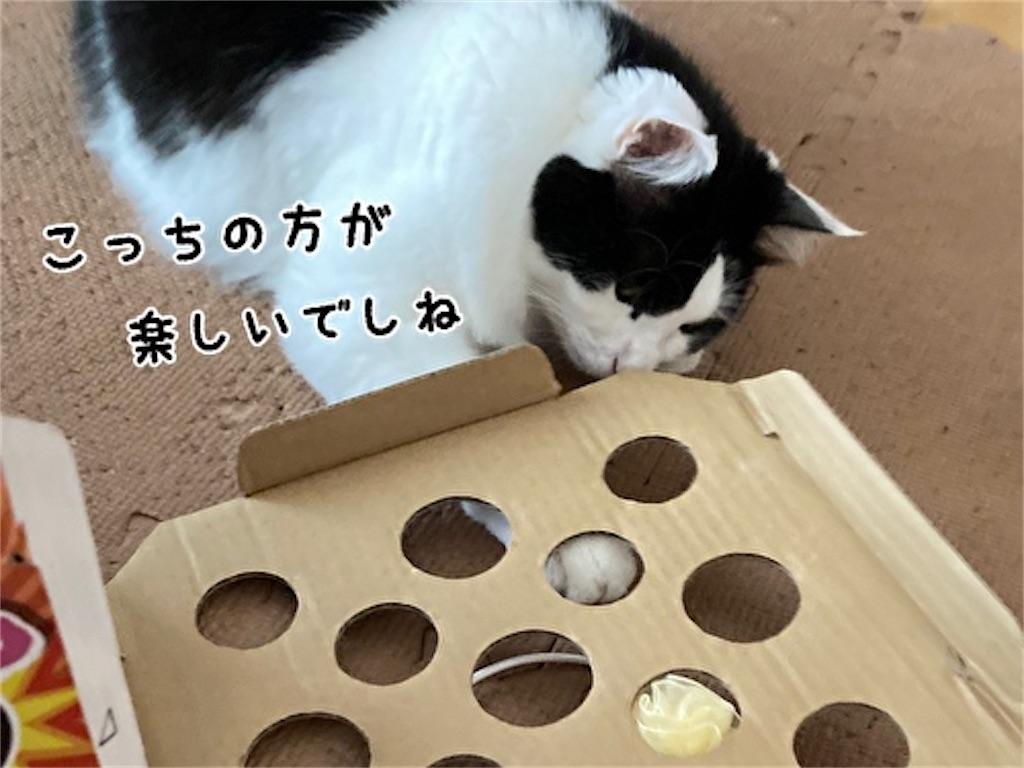 f:id:fukufukudo:20211006163015j:plain