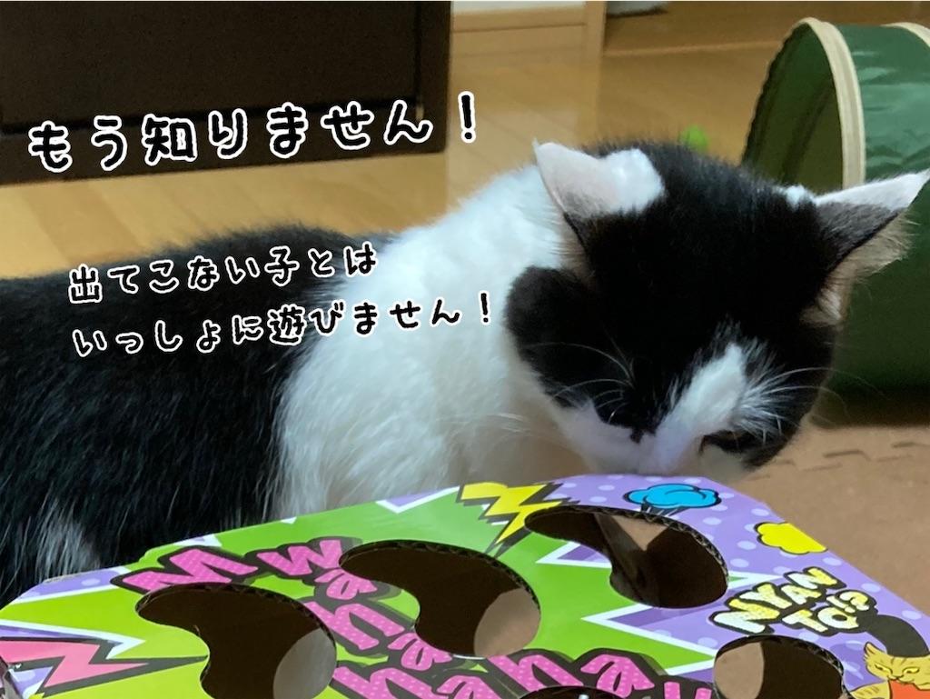 f:id:fukufukudo:20211006163536j:plain