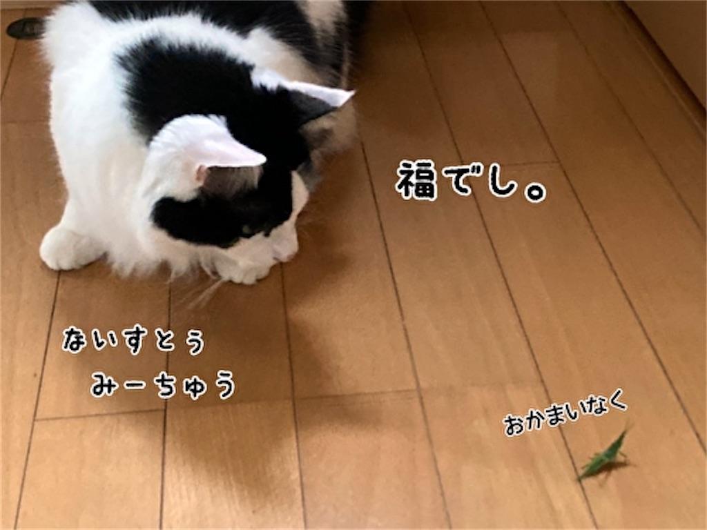 f:id:fukufukudo:20211009133851j:plain