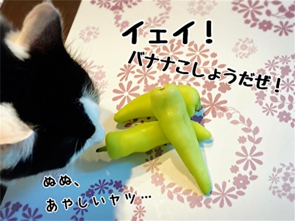 f:id:fukufukudo:20211009133904j:plain