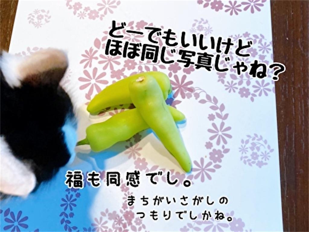f:id:fukufukudo:20211009134225j:plain