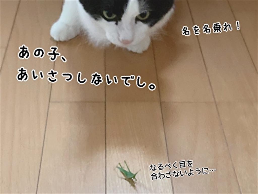 f:id:fukufukudo:20211009140714j:plain
