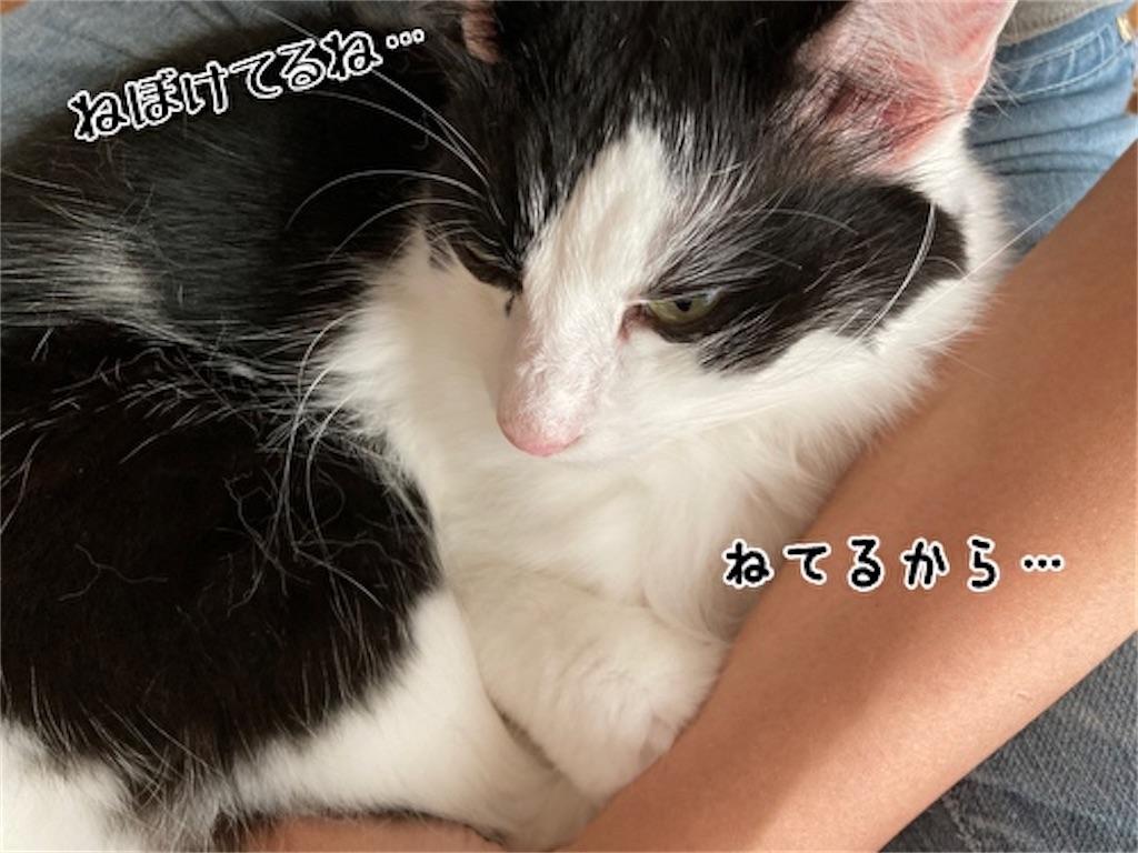 f:id:fukufukudo:20211013145943j:plain
