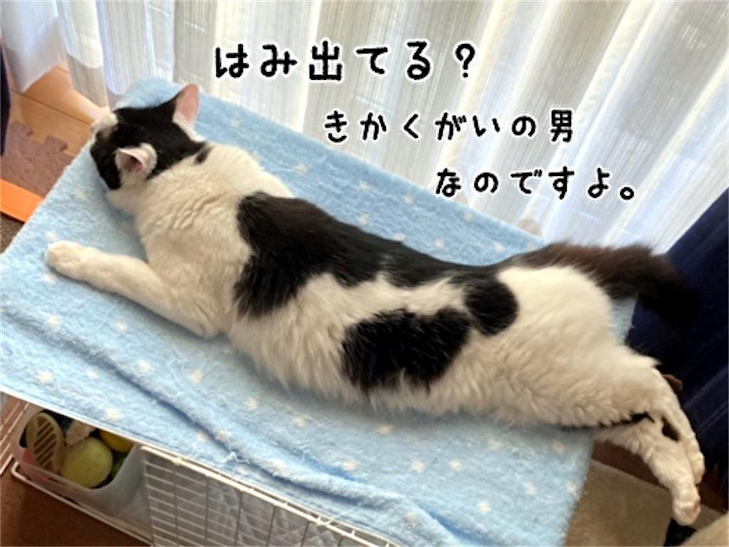 f:id:fukufukudo:20211013150103j:plain