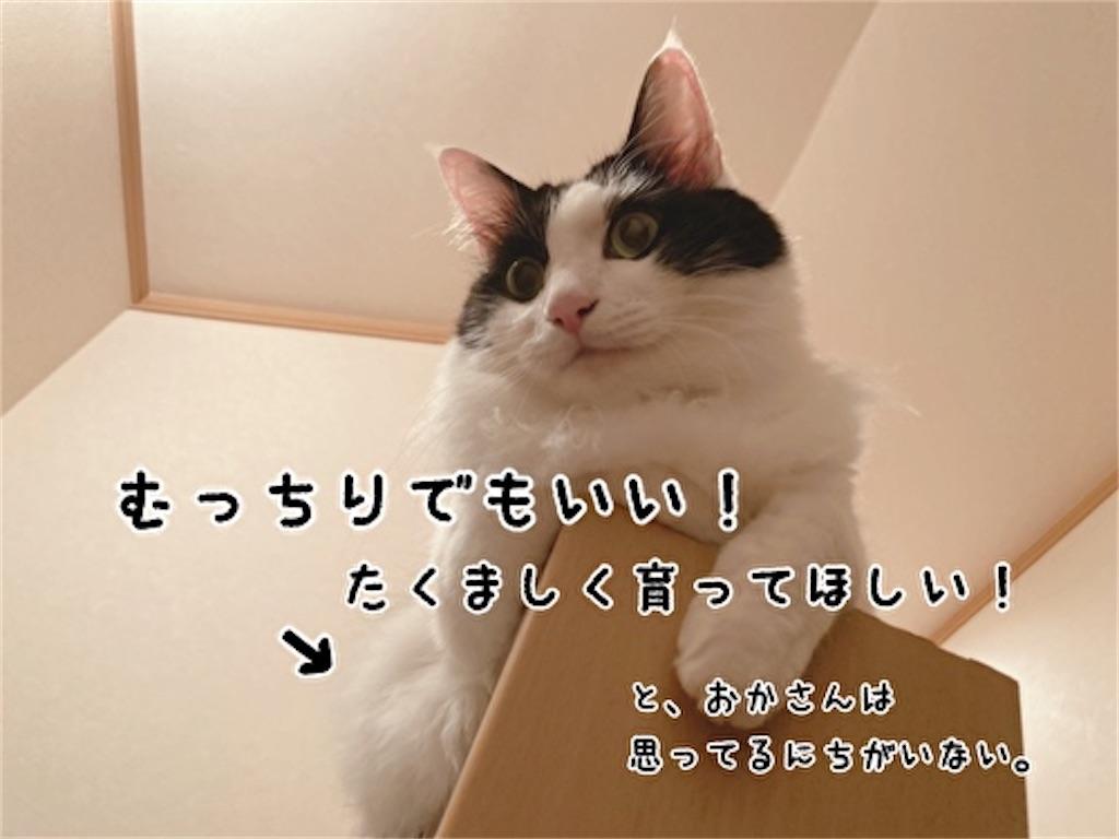 f:id:fukufukudo:20211013151415j:plain