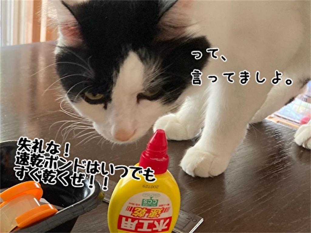 f:id:fukufukudo:20211014184148j:plain