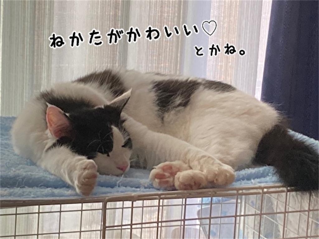 f:id:fukufukudo:20211017111948j:plain