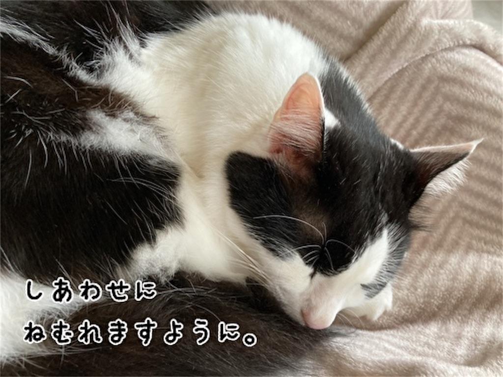 f:id:fukufukudo:20211017142620j:plain