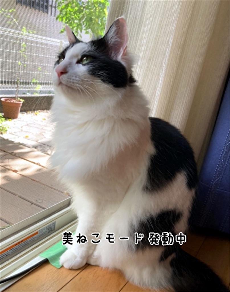 f:id:fukufukudo:20211019170901j:plain