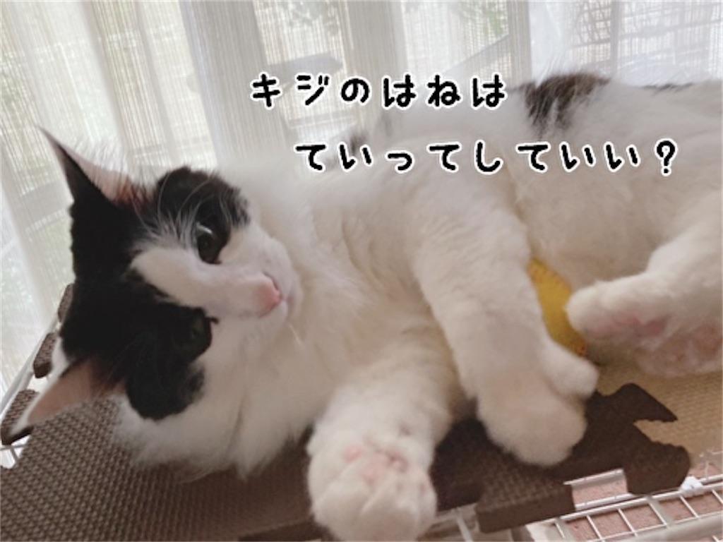 f:id:fukufukudo:20211019172608j:plain