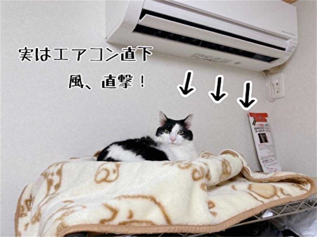 f:id:fukufukudo:20211023145127j:plain