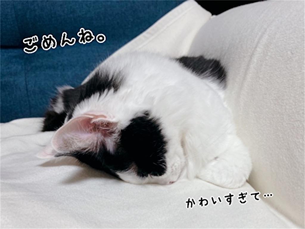 f:id:fukufukudo:20211023194452j:plain