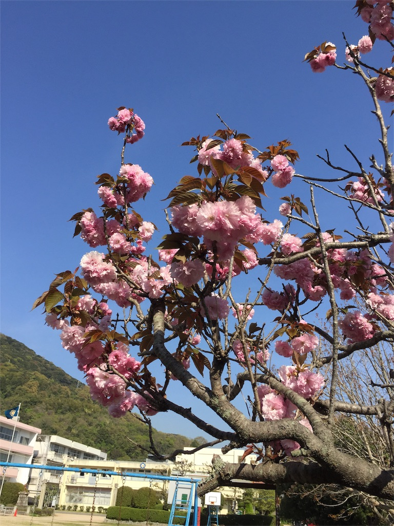 f:id:fukugawa-es:20180410154034j:image