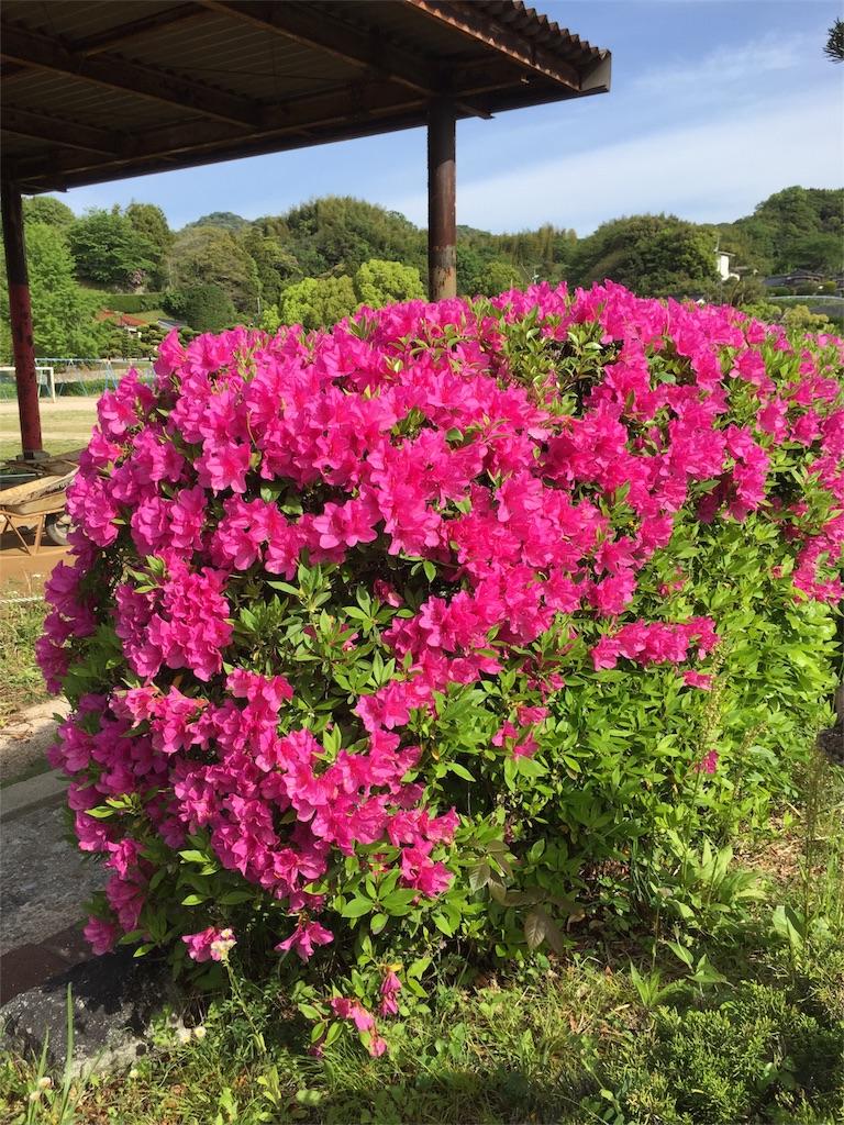 f:id:fukugawa-es:20180426085140j:image