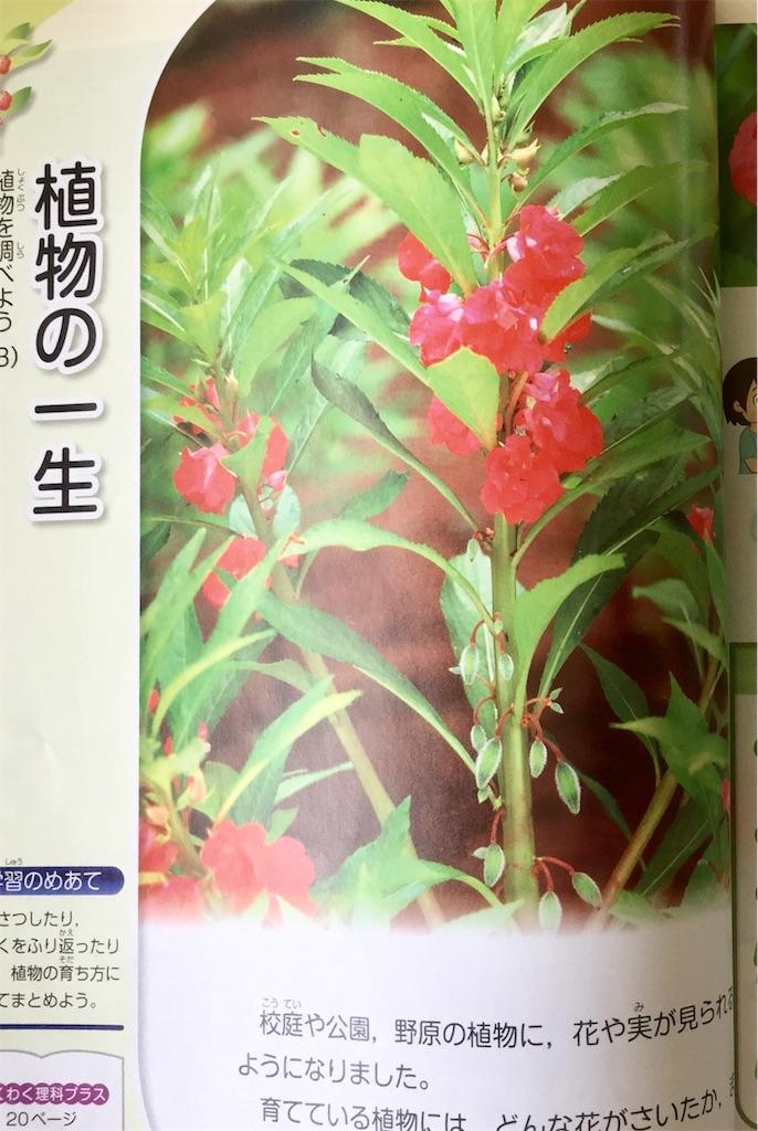 f:id:fukugawa-es:20181011124810j:image