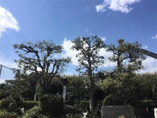 f:id:fukugawa-es:20190315145656j:image
