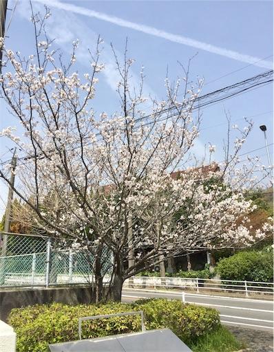 f:id:fukugawa-es:20190329140517j:image