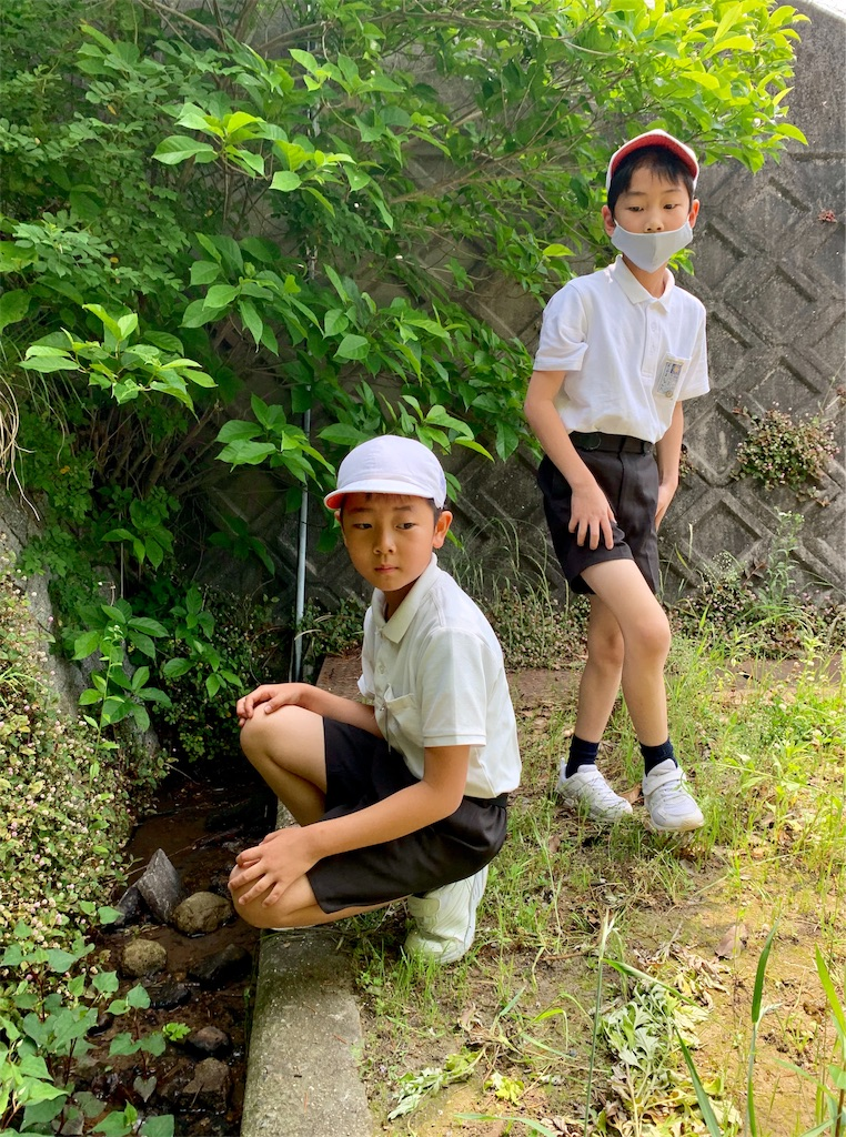 f:id:fukugawa-es:20200527103007j:image
